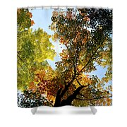 Autumn Trees Low-angle Shower Curtain
