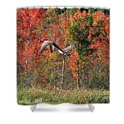 Autumn Vermont Geese And Color Shower Curtain