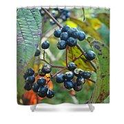 Autumn Viburnum Berries Series #2 Shower Curtain