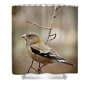 Autumn Wildlife Shower Curtain