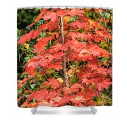 Autumnal Acer Shower Curtain