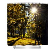 Autumnal Morning Shower Curtain