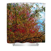 Autumns Beauty Shower Curtain
