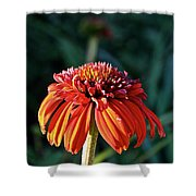 Autumn's Cone Flower Shower Curtain