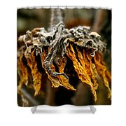 Autumn's Gold Shower Curtain