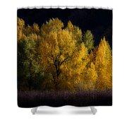 Autumn's Last Hurrah Shower Curtain