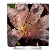 Autumn's Lily Shower Curtain