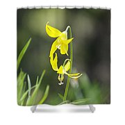 Avalanche Lily Shower Curtain