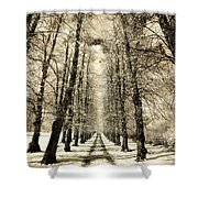 Avenue Of Trees Shower Curtain