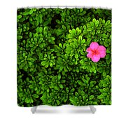 Azalea On Boxwoods Shower Curtain