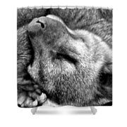 B W Slumber Shower Curtain