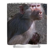 Baboon Carrying Her Baby Shower Curtain