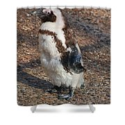 Baby African Penguin Shower Curtain