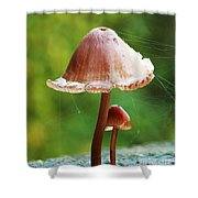 Baby And Parent Mushroom Shower Curtain