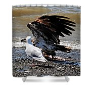 Baby Bald Eagle Movement Shower Curtain