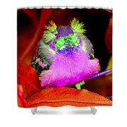 Baby Bird Of A Different Color Shower Curtain