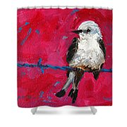 Baby Bird On A Wire Shower Curtain by Patricia Awapara