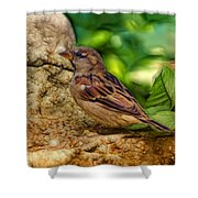 Baby Birdie Shower Curtain