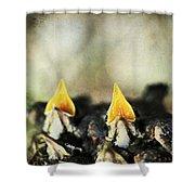 Baby Birds Shower Curtain by Darren Fisher