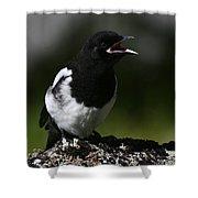 Baby Blackbilled Magpie Shower Curtain