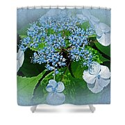 Baby Blue Lace Cap Hydrangea Shower Curtain