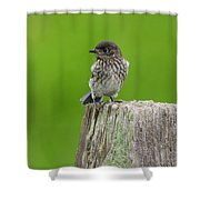 Baby Bluebird On Post Shower Curtain