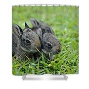Baby Bunnies Shower Curtain