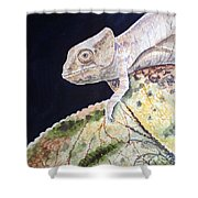 Baby Chameleon Shower Curtain
