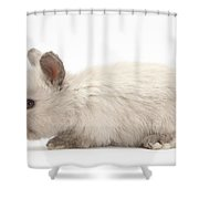 Baby Colorpoint Rabbit Shower Curtain