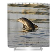 Baby Dolphin Shower Curtain