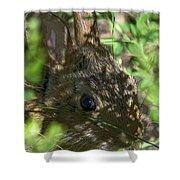 Baby Eastern Cottontail Rabbit Dmam011 Shower Curtain