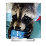 Baby Face Bandit Shower Curtain