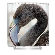 Baby Flamingo Shower Curtain