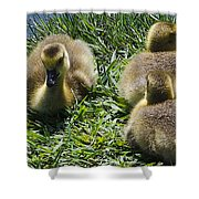 Baby Geese Shower Curtain