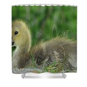 Baby Goose Takes A Break Shower Curtain