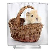 Baby Guinea Pig In A Wicker Basket Shower Curtain