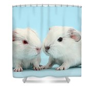 Baby Guinea Pigs Shower Curtain