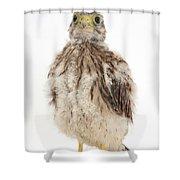 Baby Kestrel Shower Curtain
