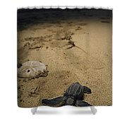 Baby Leatherback Turtle On Beach Shower Curtain