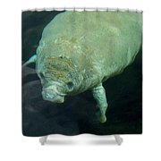 Baby Manatee Shower Curtain by Carla Parris