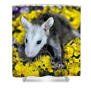 Baby Opossum In Flowers Shower Curtain