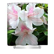 Baby Pink Azaleas Shower Curtain