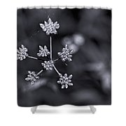 Baby Queen Anne's Lace Monochrome Shower Curtain