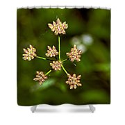 Baby Queen Anne's Lace Shower Curtain