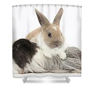 Baby Rabbit And Long-haired Guinea Pig Shower Curtain