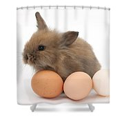 Baby Rabbit With Eggs Shower Curtain