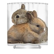 Baby Rabbits Shower Curtain by Mark Taylor