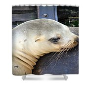 Baby Seal Shower Curtain