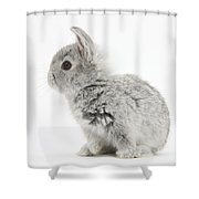 Baby Silver Rabbit Shower Curtain