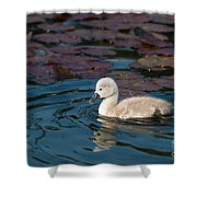 Baby Swan Shower Curtain